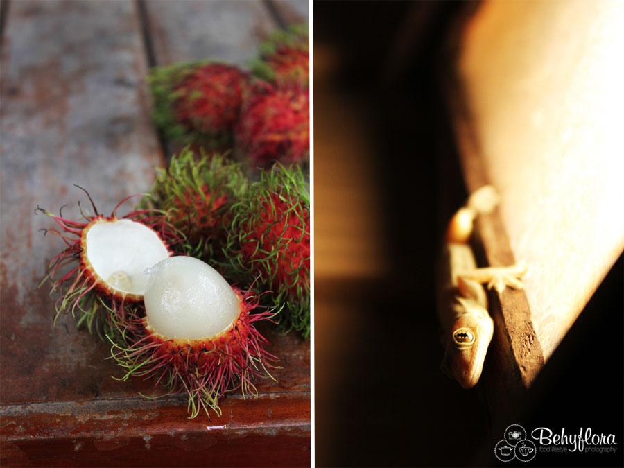 Wild Gecko und Rambutan