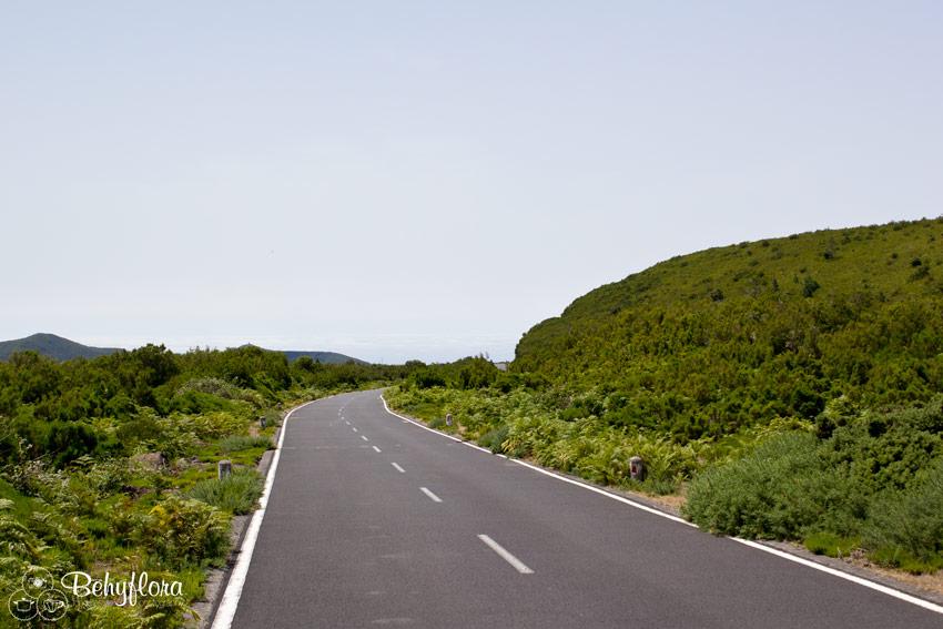 Die Straße führt zum Parkplatz PR13 - Vereda do Fanal