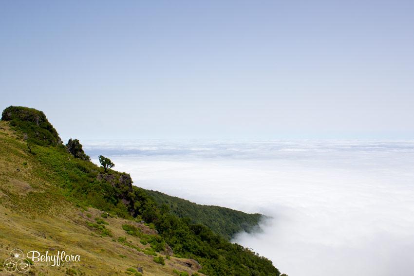 Einmal über den Wolken stehen