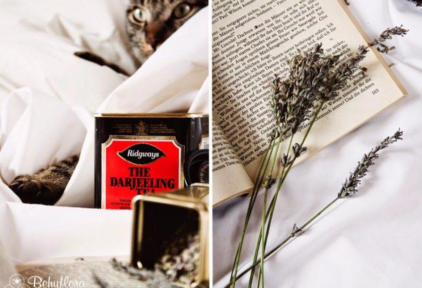 kater und Schwarzer Tee